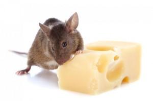 Topi-formaggio